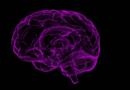 Científicos encuentran cuatro diferentes tipos de Alzheimer
